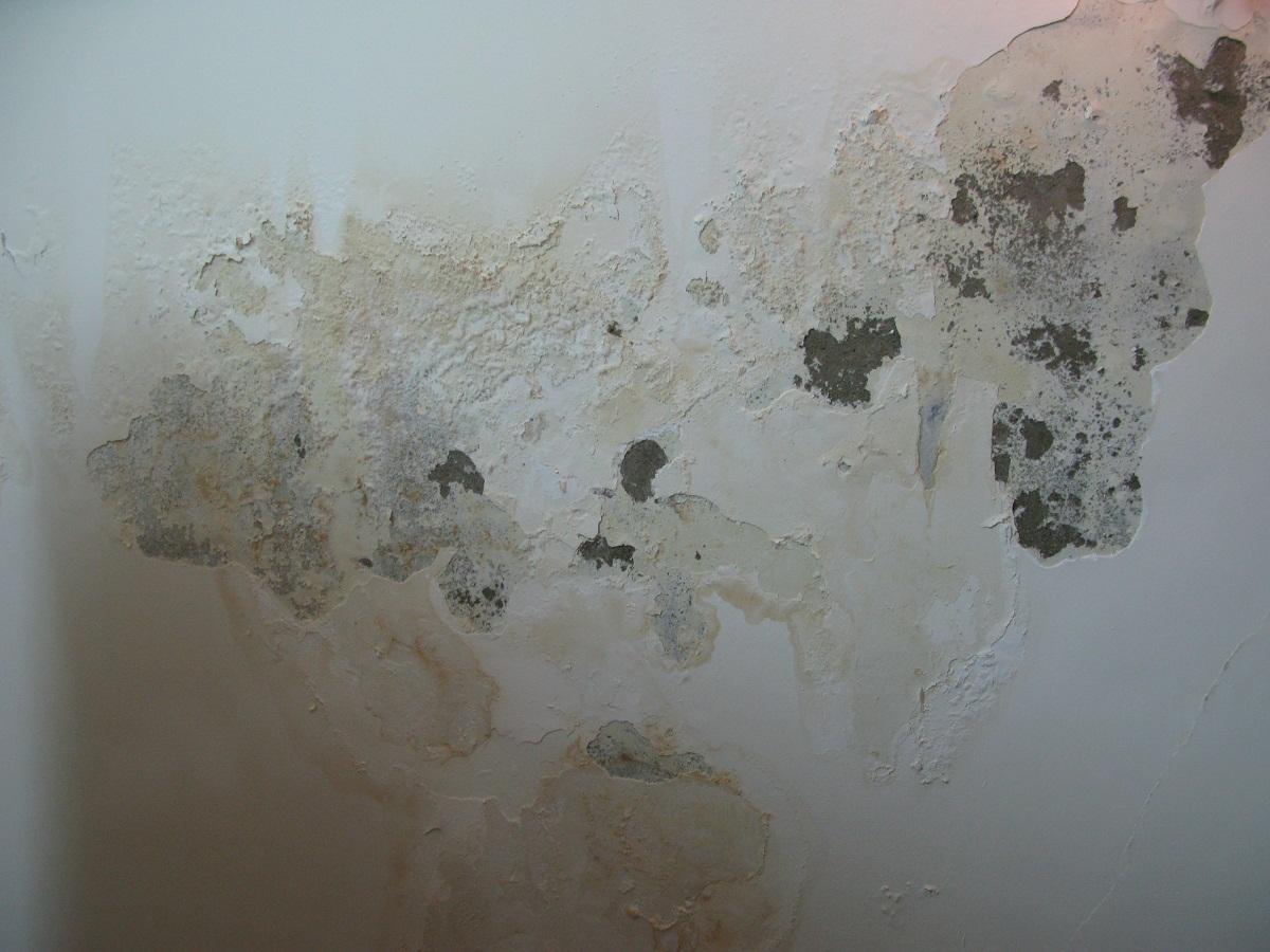Cách cạo lớp sơn tường cũ để mang lại diện mạo mới cho ngôi nhà.